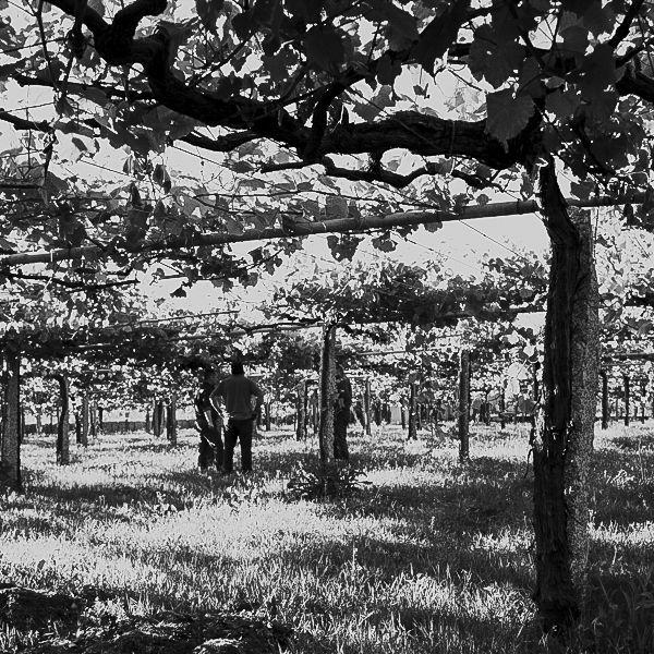 tb finalewijnen spaans wijnconcours